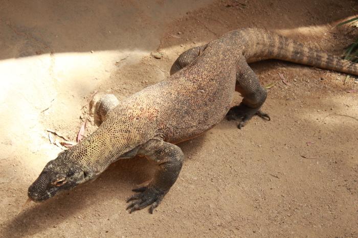 シドニー~タロンガ動物園_d0337698_20015730.jpg
