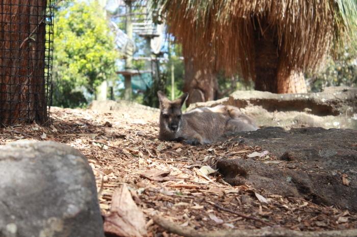 シドニー~タロンガ動物園_d0337698_20020858.jpg