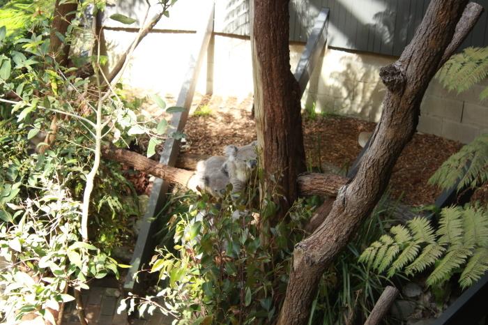 シドニー~タロンガ動物園_d0337698_20021994.jpg