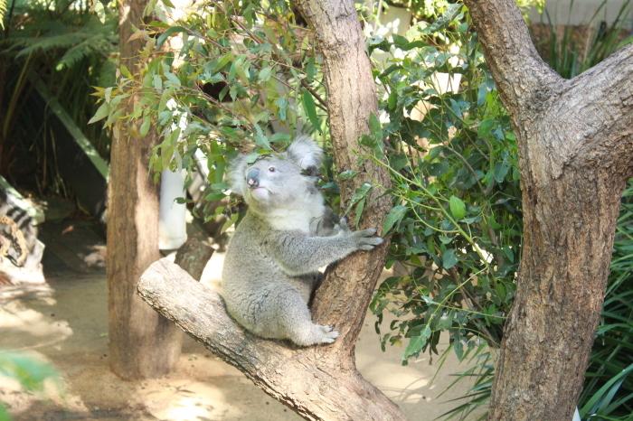 シドニー~タロンガ動物園_d0337698_20023329.jpg