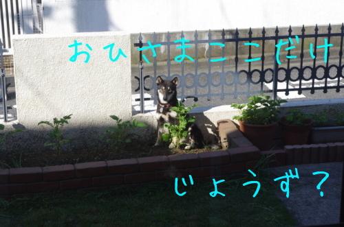 f0369014_13522630.jpg