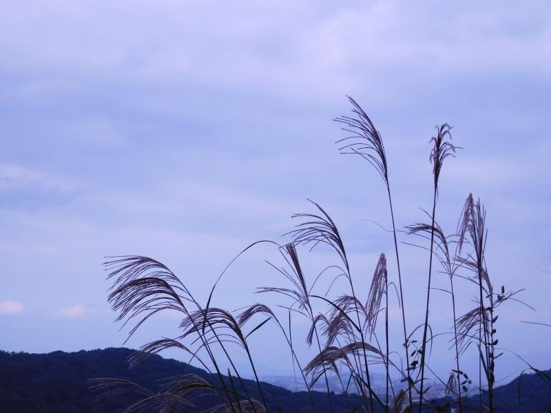 冬の「匂い」_a0125419_12223822.jpg