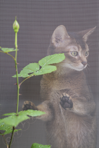 [猫的]薔薇猫_e0090124_22310056.jpg