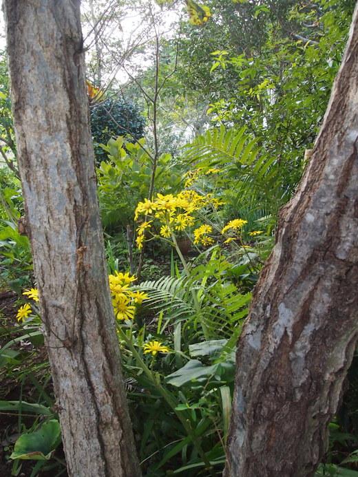 廃園に、咲く花々・・・そして、ついに・・・ついに・・・_f0152733_172022.jpg