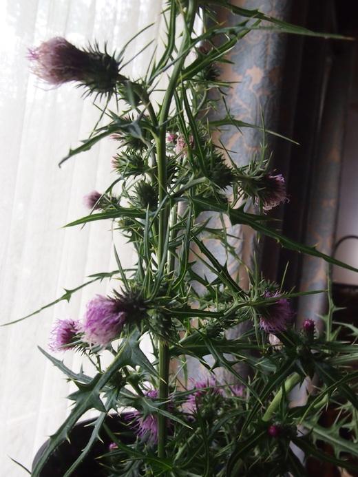 廃園に、咲く花々・・・そして、ついに・・・ついに・・・_f0152733_17224119.jpg