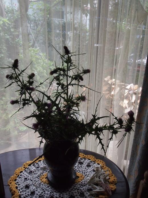 廃園に、咲く花々・・・そして、ついに・・・ついに・・・_f0152733_172262.jpg