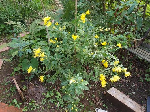 廃園に、咲く花々・・・そして、ついに・・・ついに・・・_f0152733_17232771.jpg