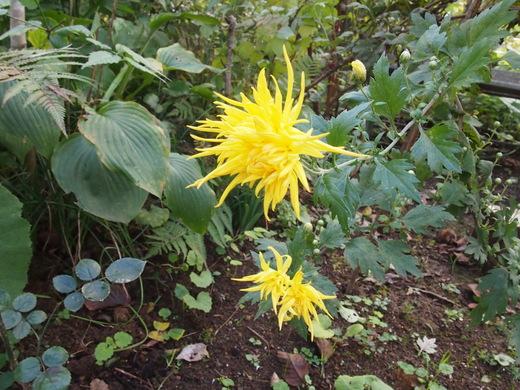 廃園に、咲く花々・・・そして、ついに・・・ついに・・・_f0152733_1723432.jpg