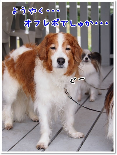 d0013149_00161475.jpg