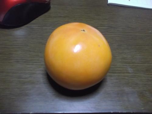 柿は超不作...です。_b0137932_12444931.jpg