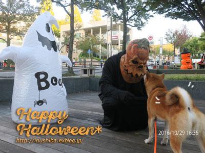 柴犬たちのハロウィンパレード@星が丘テラス_a0286855_06255190.jpg