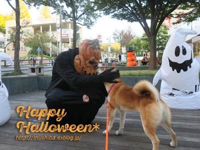 柴犬たちのハロウィンパレード@星が丘テラス_a0286855_06255440.jpg