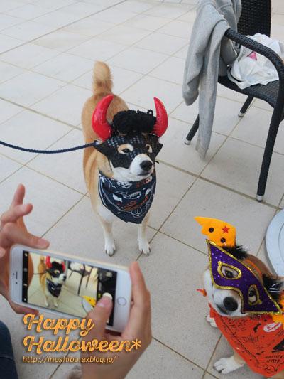 柴犬たちのハロウィンパレード@星が丘テラス_a0286855_06260185.jpg