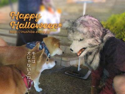 柴犬たちのハロウィンパレード@星が丘テラス_a0286855_06261790.jpg