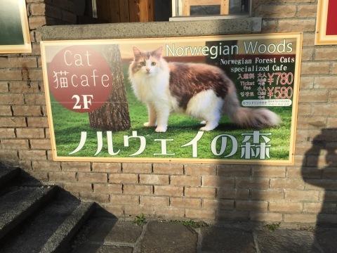 ネコカフェ「ノルウェイの森」in 九州_e0356356_18123137.jpg
