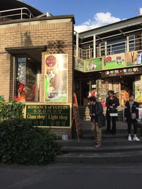 ネコカフェ「ノルウェイの森」in 九州_e0356356_18142520.jpg