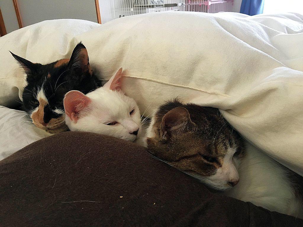 猫は布団で丸くなり_e0220163_18311045.jpg