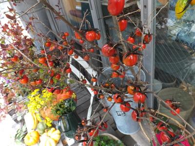 オークリーフ(紅葉と老爺柿)_f0049672_17314969.jpg