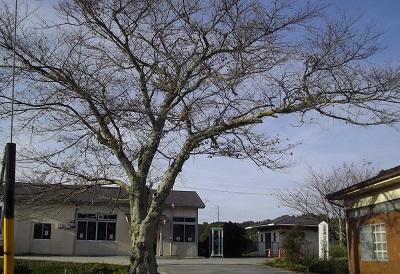 TPPバスの終着駅は日本という国の墓場。_c0243877_1041115.jpg
