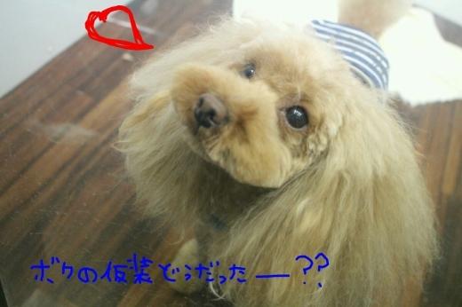 四日目!!笑_b0130018_00345979.jpg