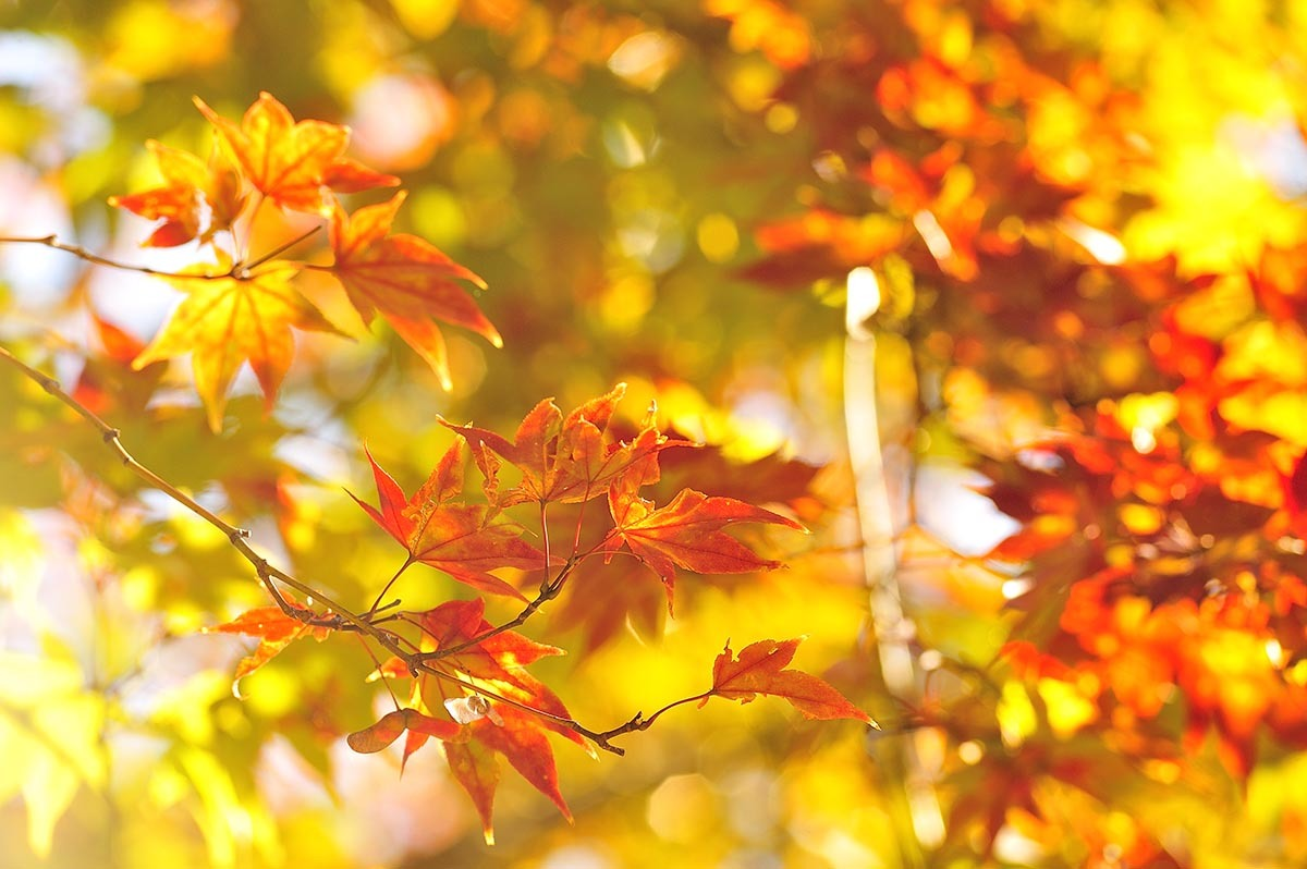 Autumn Leaves _a0059621_14564101.jpg
