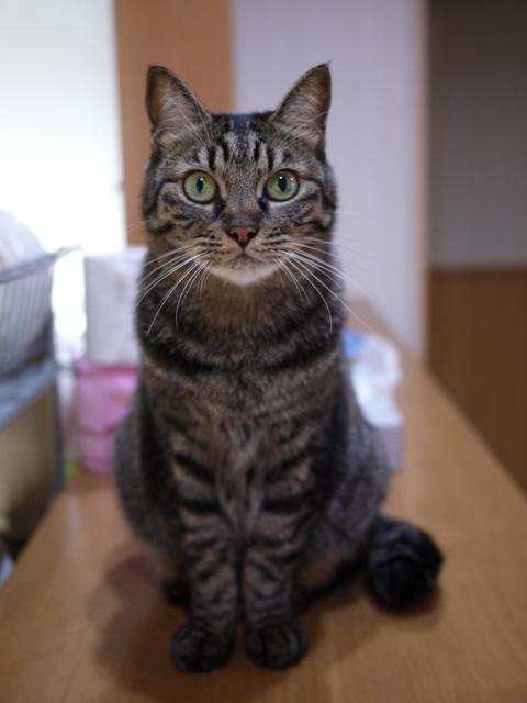 猫のお留守番 ルナルナちゃん編。_a0143140_2112136.jpg