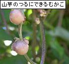 a0084343_12163214.jpg