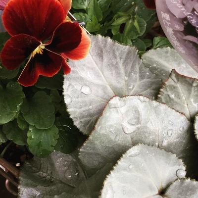 ガーデン植物、ようやく増えてきました!_a0229658_1205192.jpg