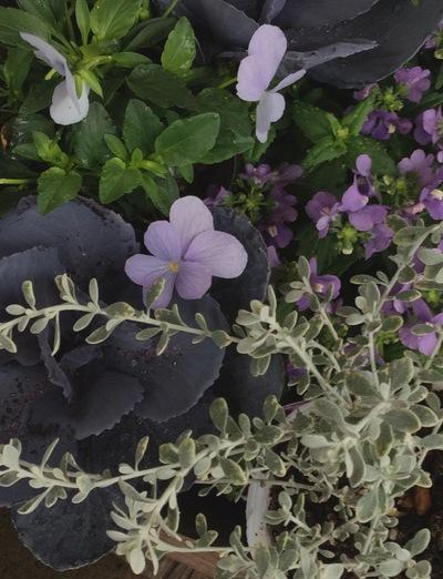 ガーデン植物、ようやく増えてきました!_a0229658_1212358.jpg
