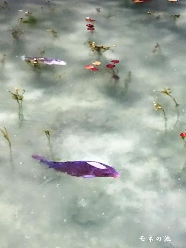 飛騨高山旅行 ~高山・郡上八幡・モネの池~_d0353281_01373636.jpg