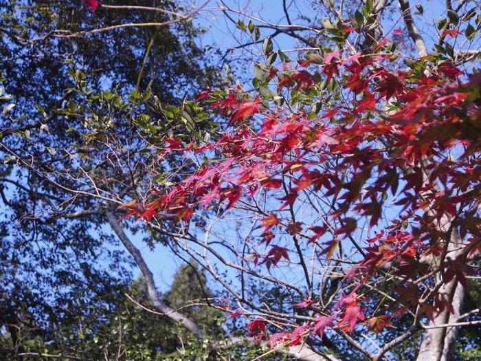紅葉。背振山麓で。_a0149488_22411413.jpg