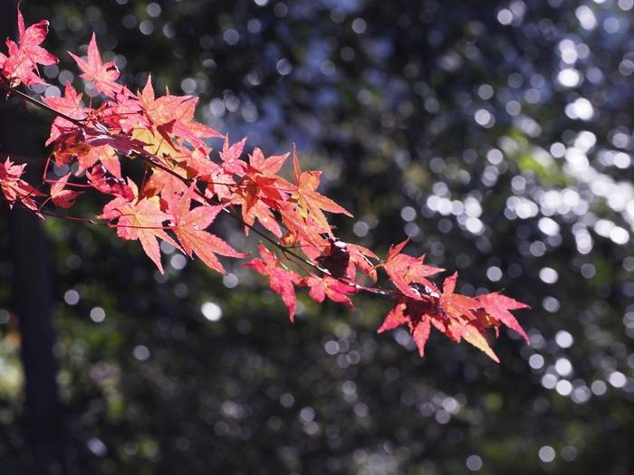紅葉。背振山麓で。_a0149488_22413569.jpg