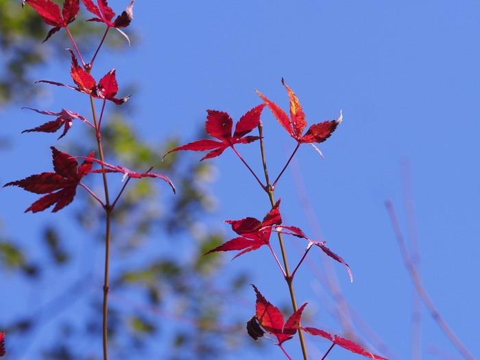紅葉。背振山麓で。_a0149488_22415480.jpg