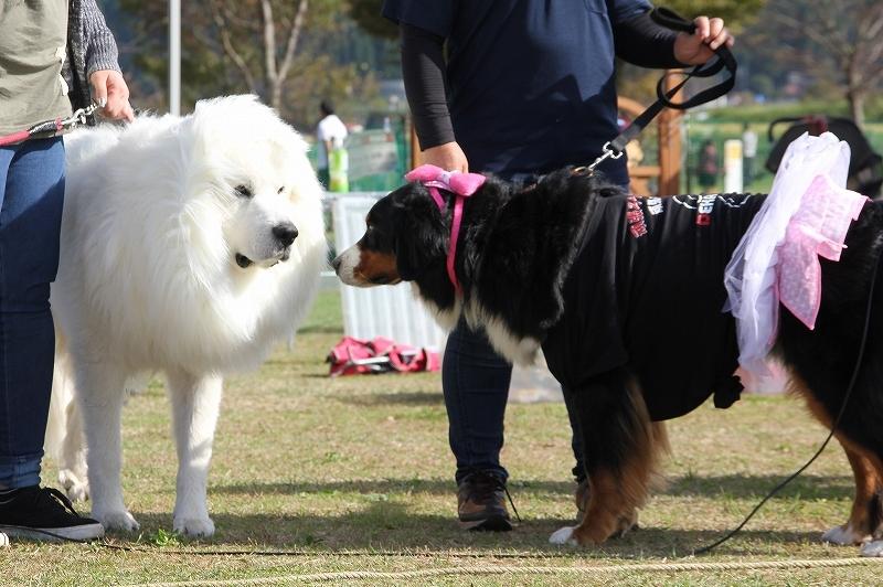 2016 DEKAWAN FC 秋のミーティング・南阿蘇_b0135889_15131922.jpg