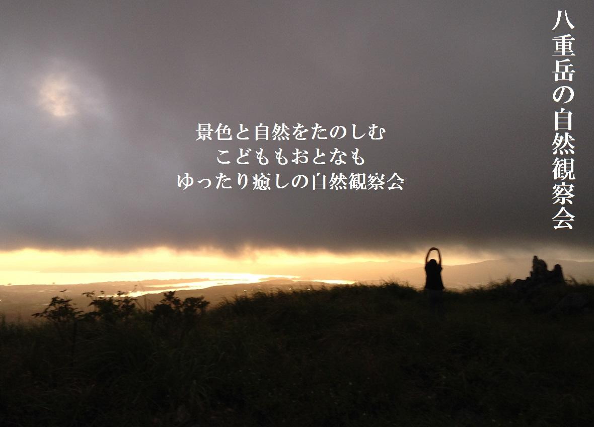 八重岳の自然観察会_a0247891_1115493.jpg