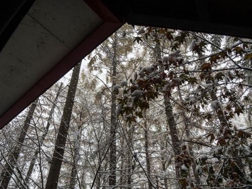 """紅葉真っ只中の""""カラマツ""""にも積雪・・今年は早い?_f0276498_22323778.jpg"""