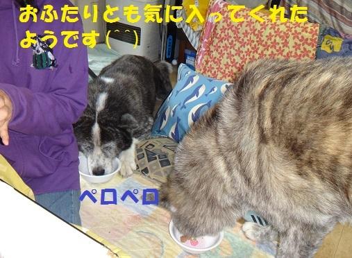 f0121712_07502125.jpg