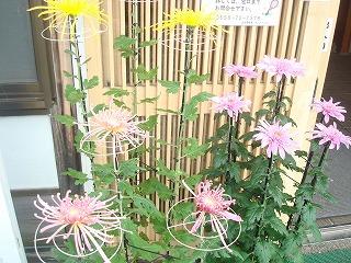 見頃のお花(^^)V_d0155416_17404140.jpg