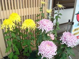 見頃のお花(^^)V_d0155416_17405779.jpg