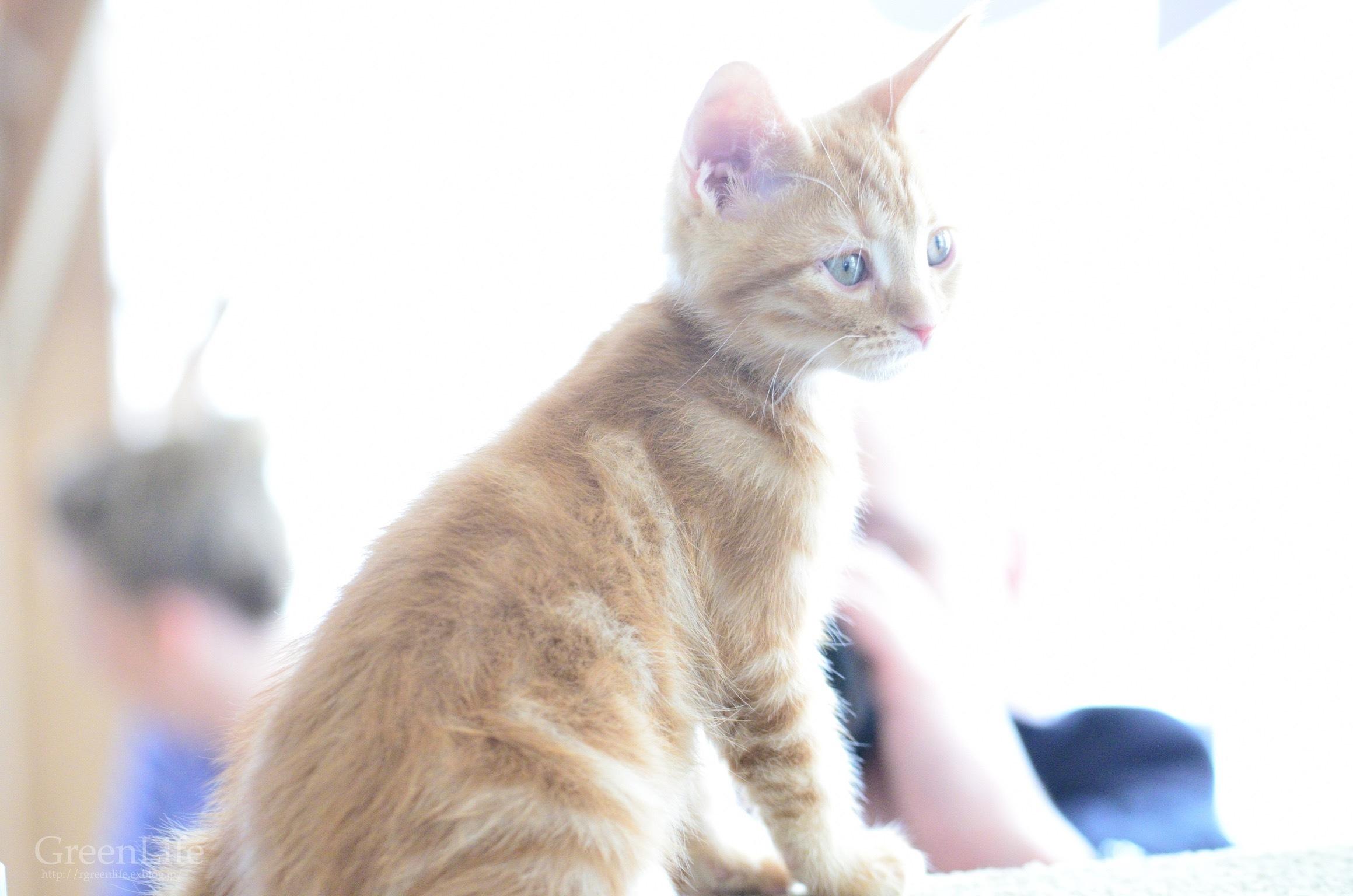 猫カフェと写真展_f0321522_11324005.jpg