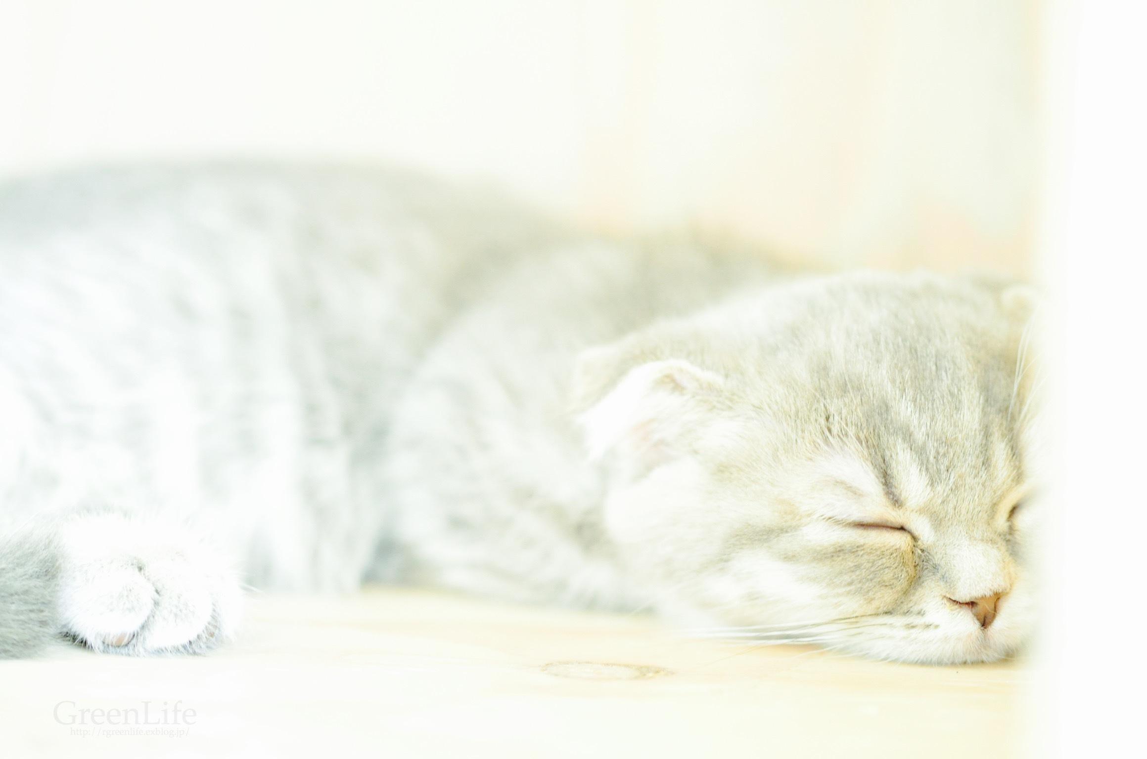 猫カフェと写真展_f0321522_11355226.jpg