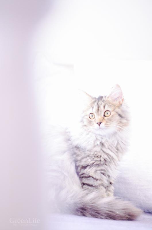 猫カフェと写真展_f0321522_11394802.jpg