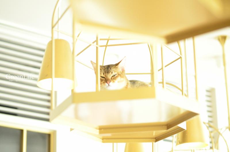 猫カフェと写真展_f0321522_11451126.jpg