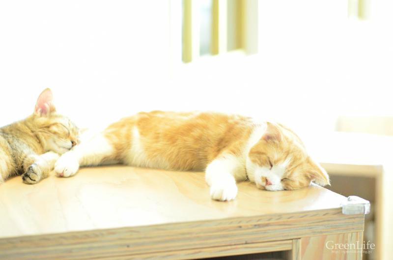 猫カフェと写真展_f0321522_11452208.jpg
