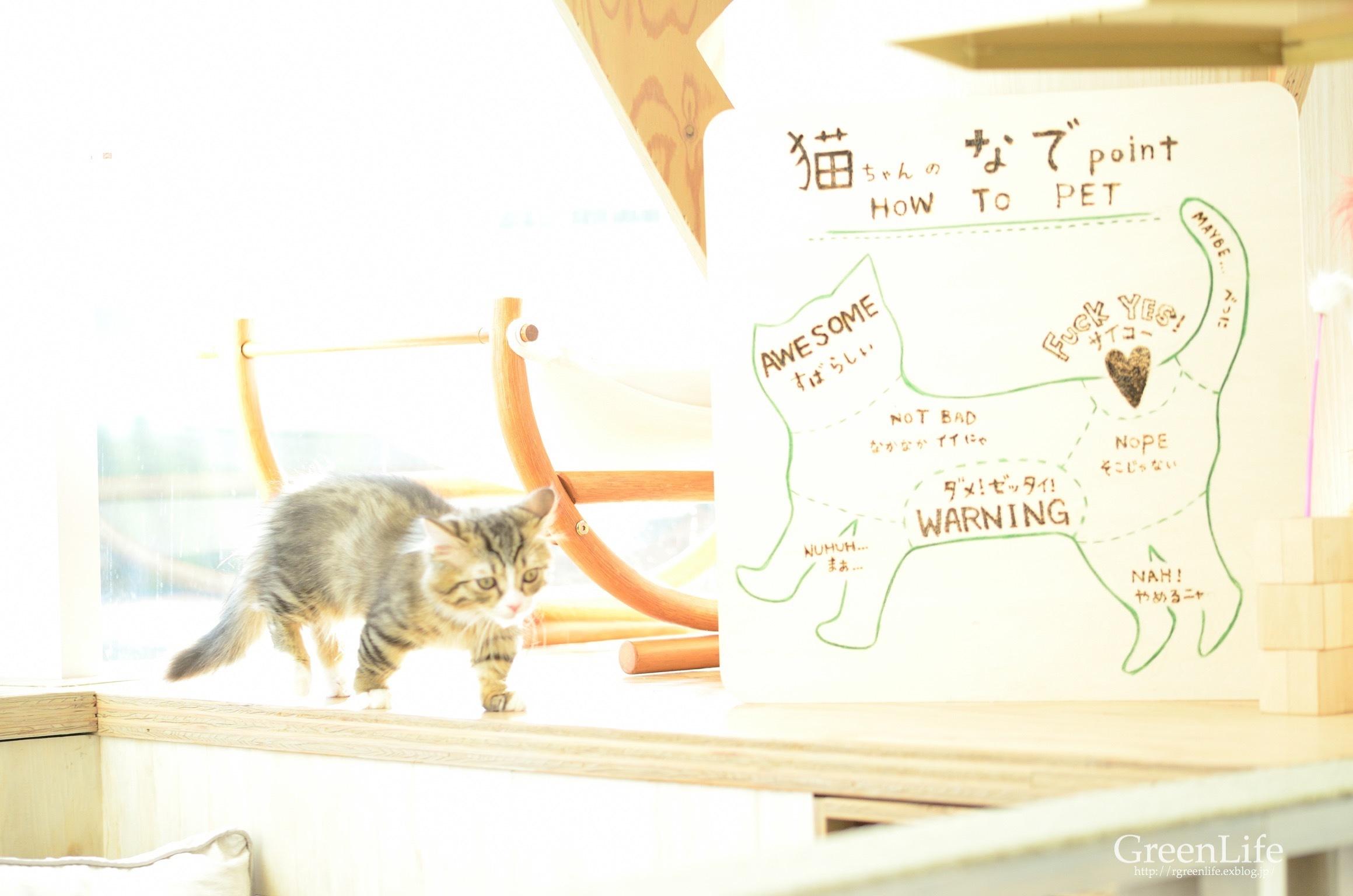 猫カフェと写真展_f0321522_11453131.jpg