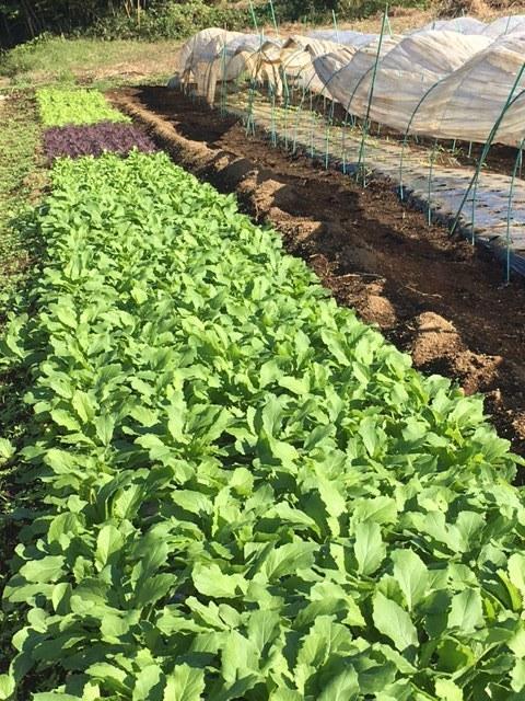 蚕豆の発芽です・・播種して11日目  _c0222448_11553112.jpg