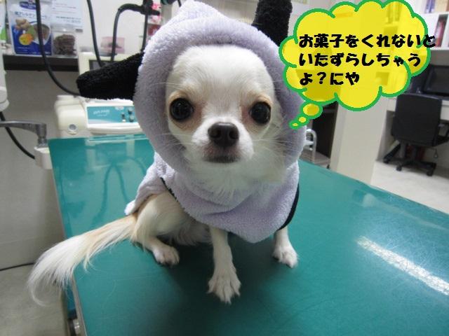 【ハッピーハロウィン🎃】_b0059154_1327717.jpg