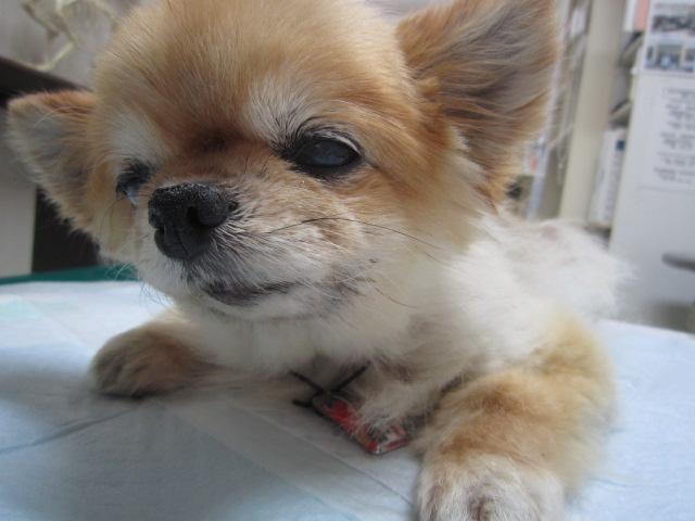 【20歳の犬!寝たきり状態から歩けるまで回復!】_b0059154_1350957.jpg