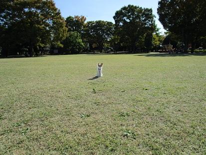 昭和記念公園へお散歩_d0006467_23495022.jpg