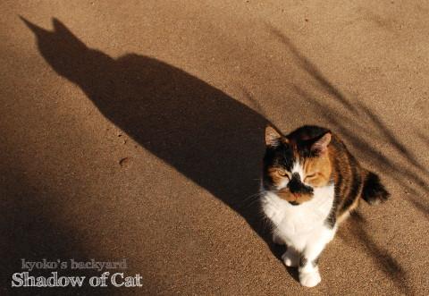 猫の影_b0253205_04173723.jpg